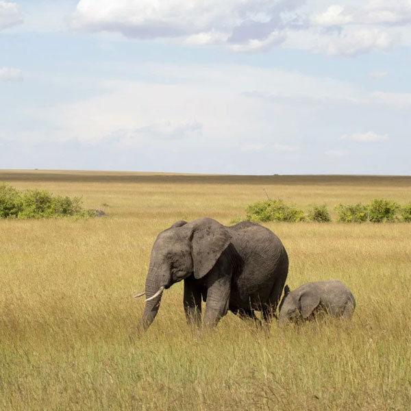 Lake Naivasha – Masai Mara (250 kms)