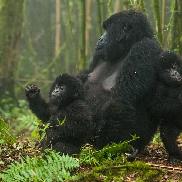 Queen Elizabeth National Park Uganda Safaris