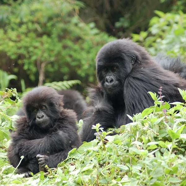 Queen Elizabeth National Park – Kibale National Park