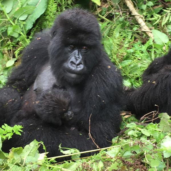 Kibale National Park & Bigodi Swamp