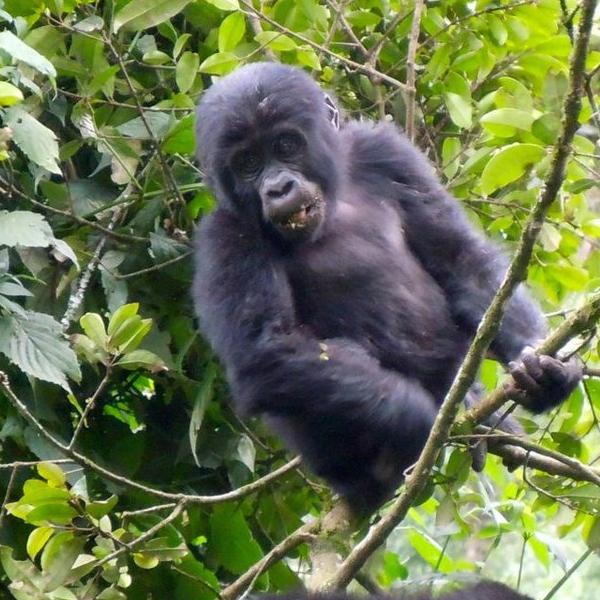 Kibale National Park – Kampala