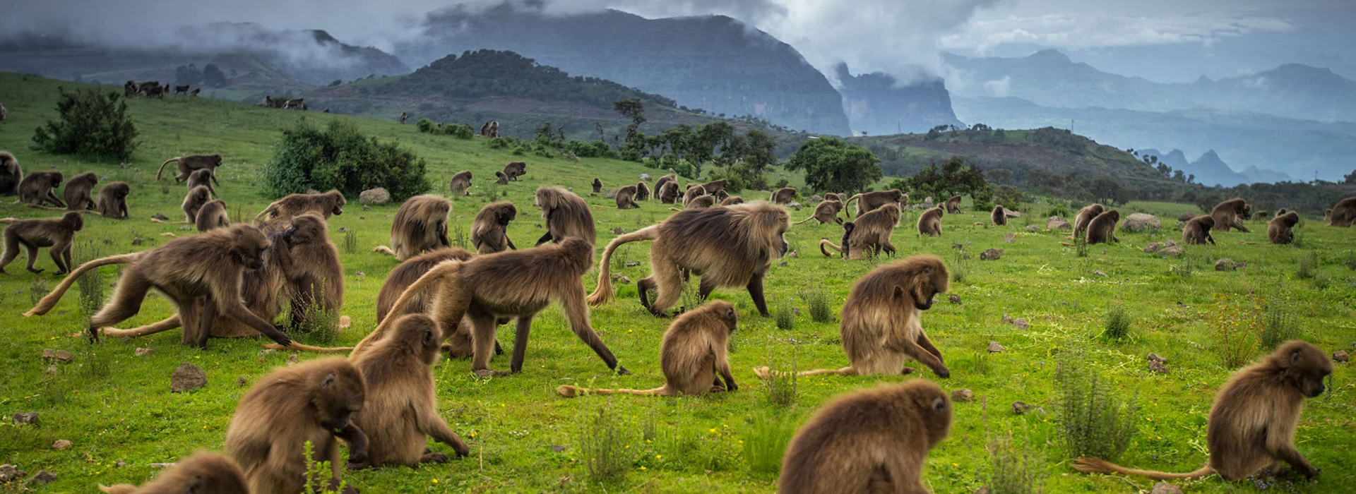 Ethiopia Safari