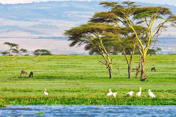Lake Navisha National Park