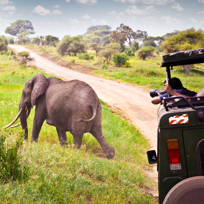 13 Days Experience Kenya And Tanzania Safari