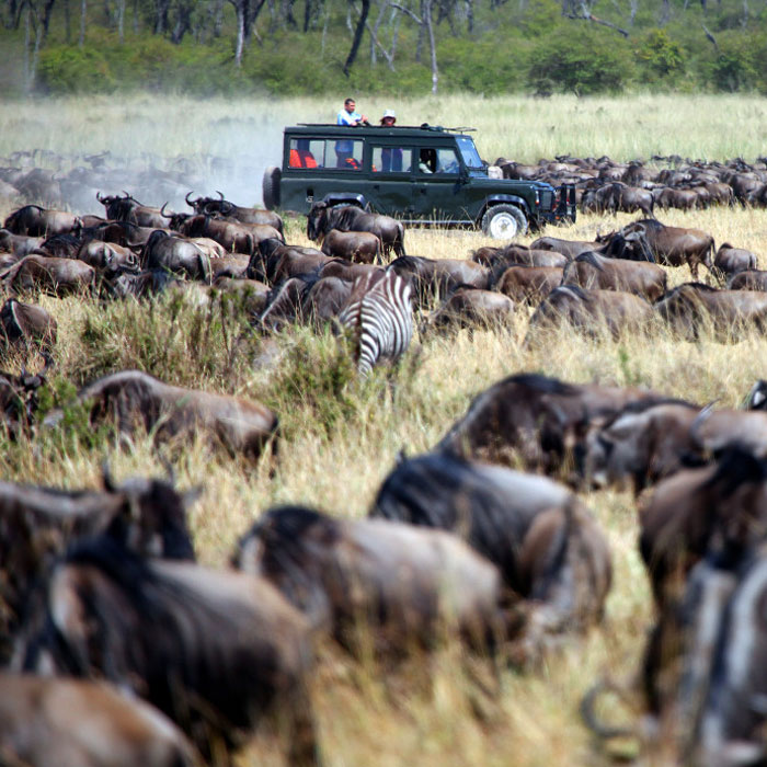 3 Days Masai Mara Wildebeest Migration Safari from Mombasa by Air