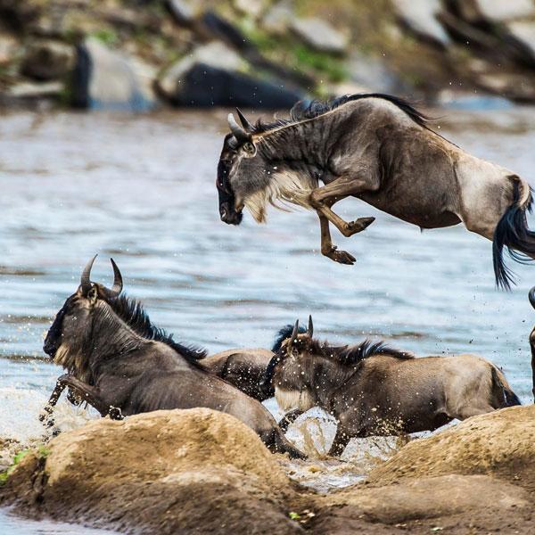 3 Days Masai Mara Wildebeest Migration Safari from Mombasa by Air