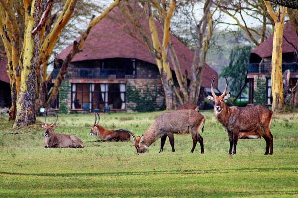 2 Days Lake Nakuru and Lake Naivasha Safari