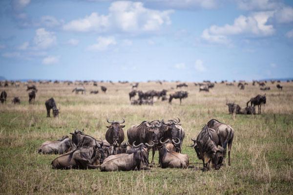 12 Days Great Kenya Safari