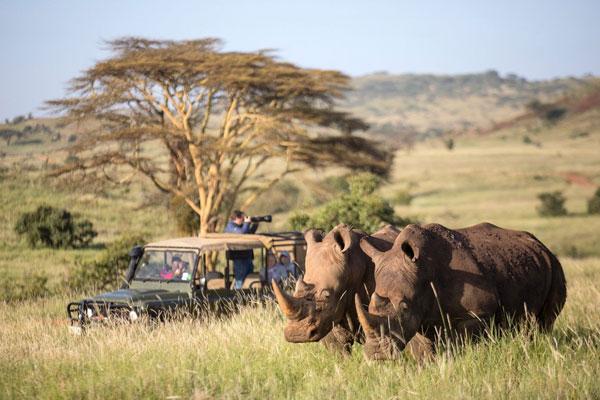 5 Days Masai Mara Wildebeest Migration Safari with a Tour of Lake Nakuru – Budget Safari