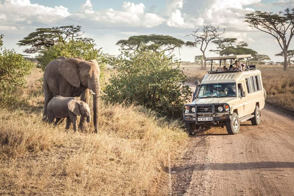 8 Days Kenya photography safari