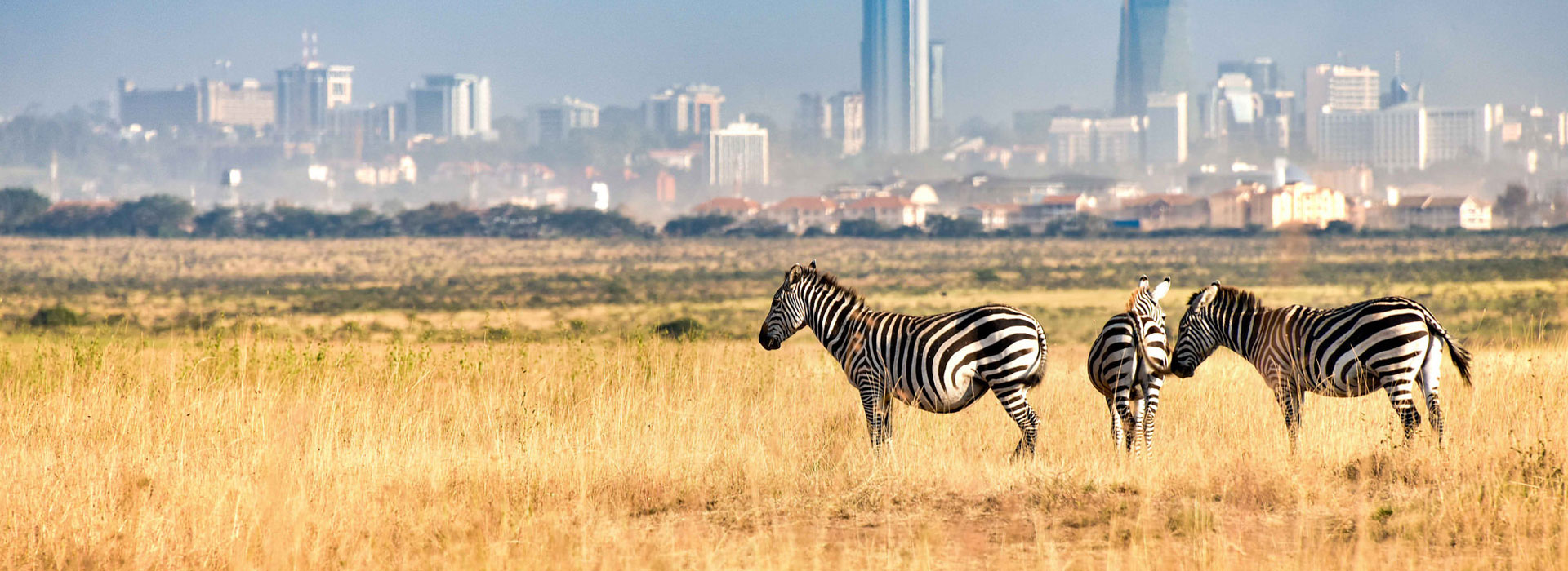 Nairobi To Nairobi Safari
