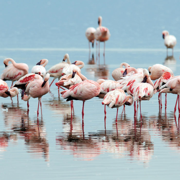 2 Days Lake Nakuru and Lake Naivasha Safari