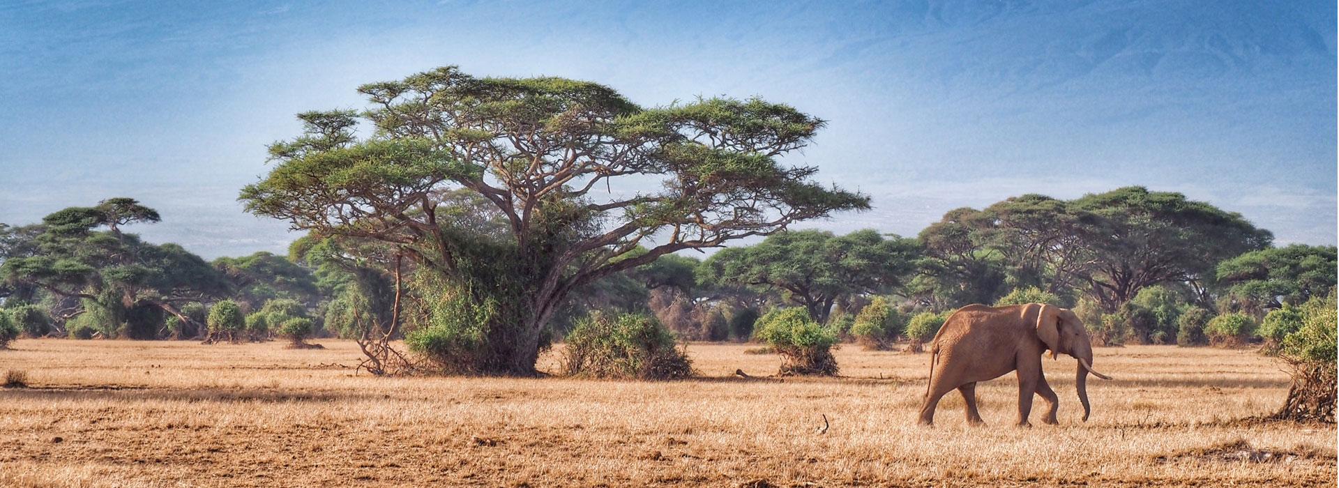 2 Nights Amboseli National Park