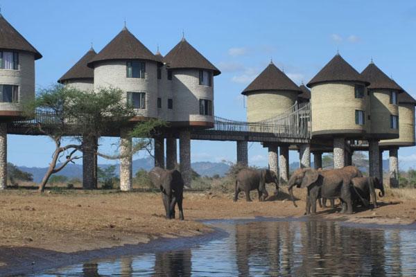 Mombasa To Mombasa Road Safaris