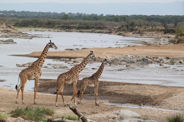 Kenya And Tanzania Road Safaris