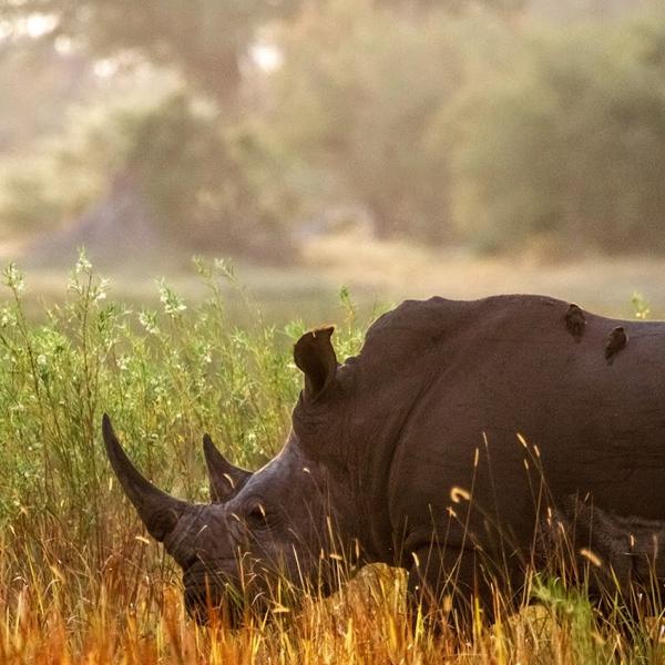 7 Days Tanzania Budget Camping Safari