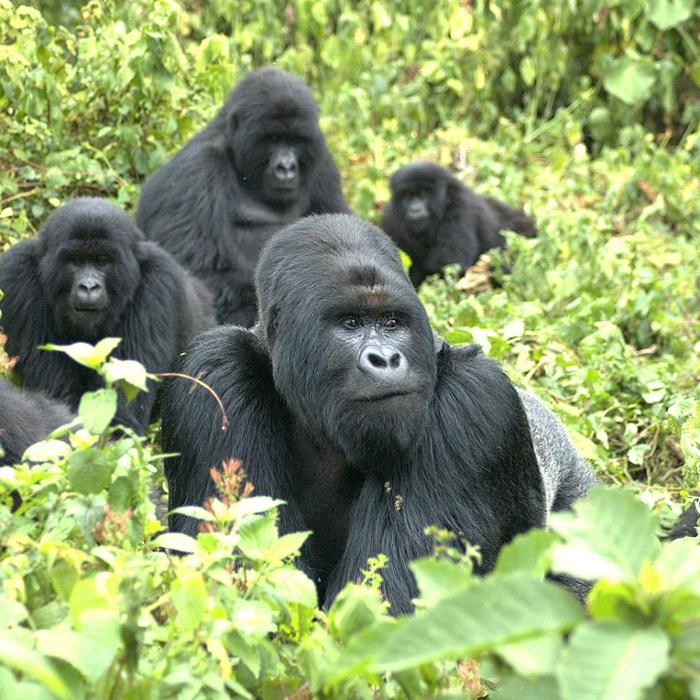 11 Days Rwanda Primate Safari