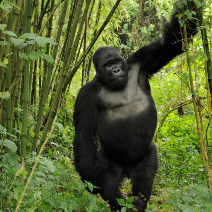 7 Days Rwanda Gorilla Trekking