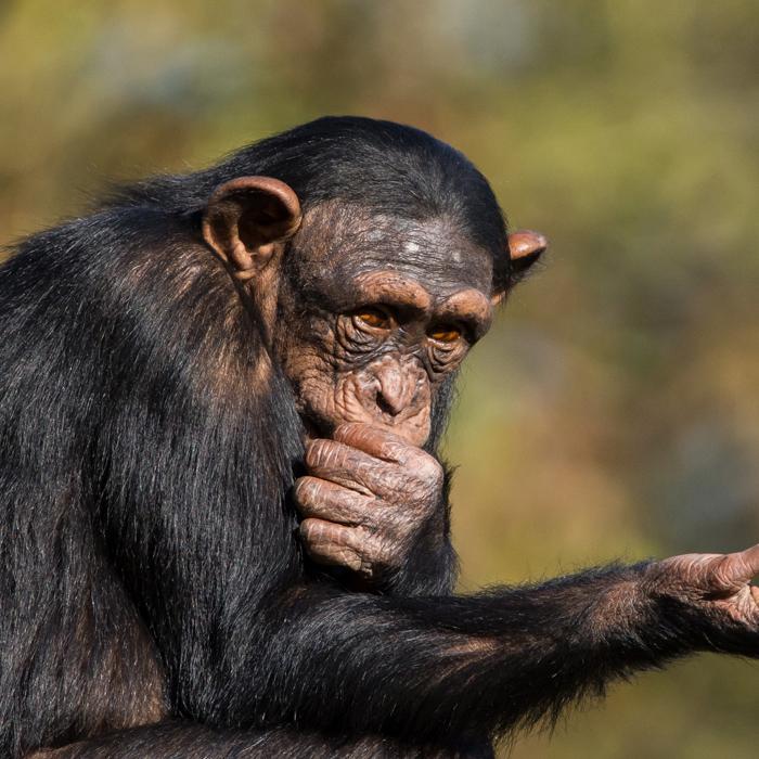 4 Days Rwanda Chimpanzee Trekkingi