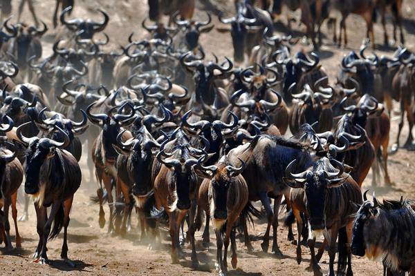 6 Day Wildebeest Migration Safari
