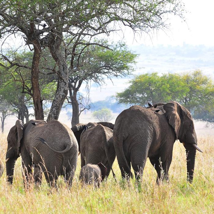 15 Days Uganda Wildlife Safar