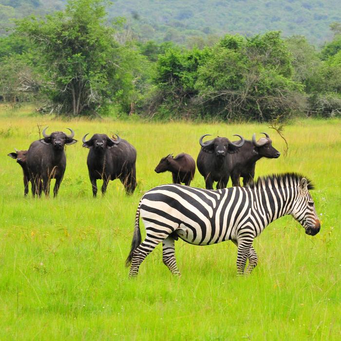 9 Days Uganda Gorilla Trekkin