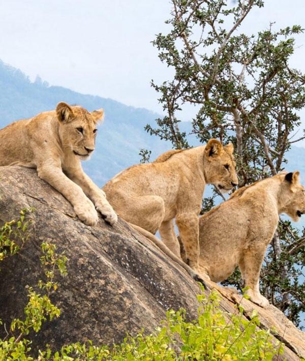 1 Day Tsavo East Safari – Day Trip Itinerary
